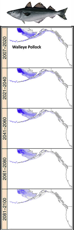Projected Shift in AK Pollock Habitat through 2100