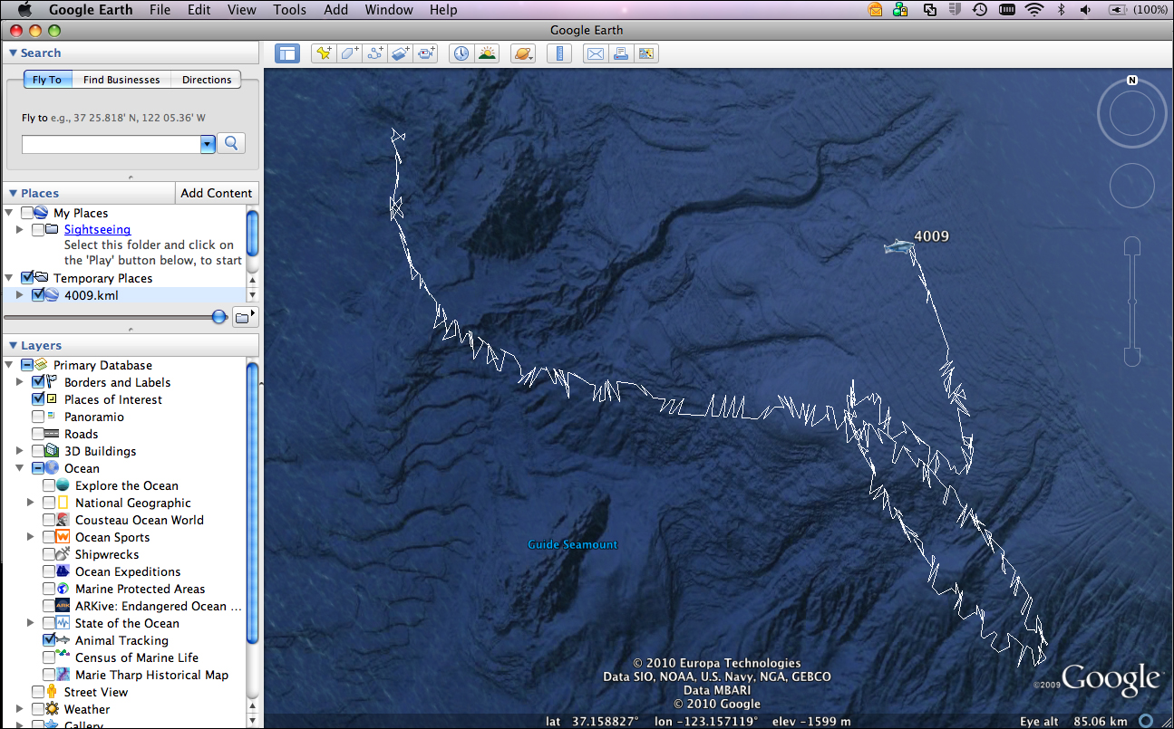 Exploring ocean data with google earth shark4009pathge gumiabroncs Images
