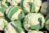 small cauliflower from USDA