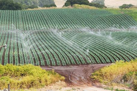 Watering crops in central California