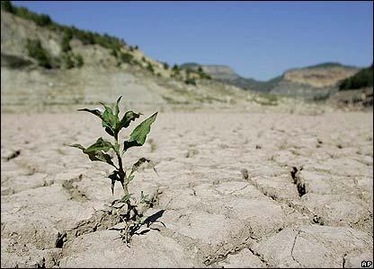 Drought - Failed Crop