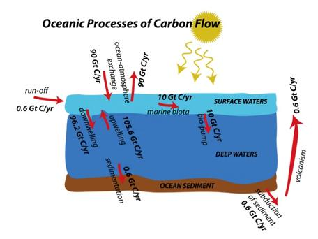 oceanic carbon flows