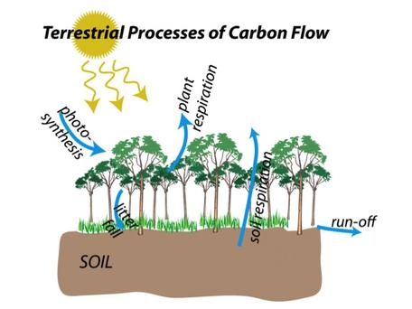 terrestrial carbon flows