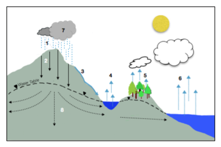 Empty Of Water Cycle Diagram Radio Wiring Diagram