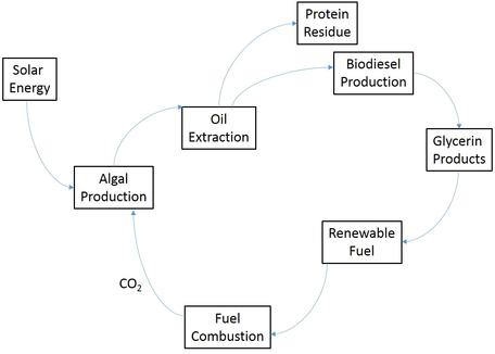 Algae-to-oil process