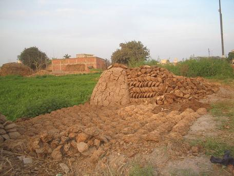 Cow dung in India drying for later use in cooking stovves