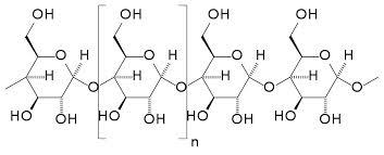 Starch molecular structure