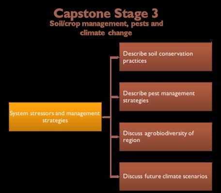 Capstone Stage 3