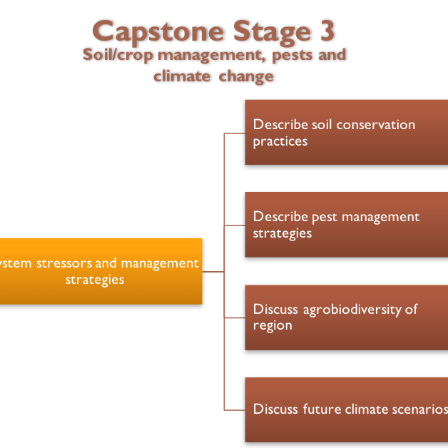 management and strategy capstone essay Capstone strategy group (csg) is a provider of business management and technology consulting services, resource staffing, and product offerings through partnerships with leading solutions providers, to state and local government organizations, and small businesses.