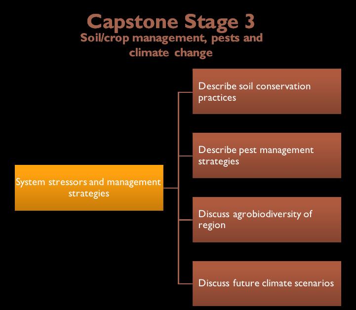 Capstone Stage 3 Diagram
