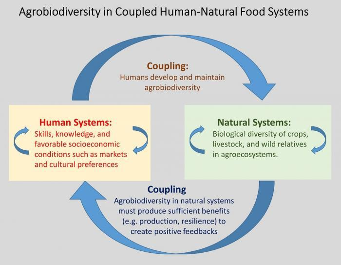 Factors in Human Systems and Natural Systems Commonly Associated with Active Use of Agrobiodiversity