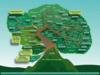 Figure 6.2.1: The Plant Family Tree