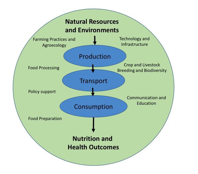 simplified diagram of food system 2000 ford 7 3 diesel fuel system diagram dietary system diagram #7
