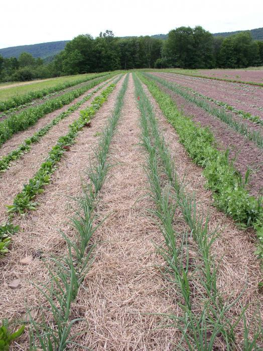 various plants with wide row spacing in a field