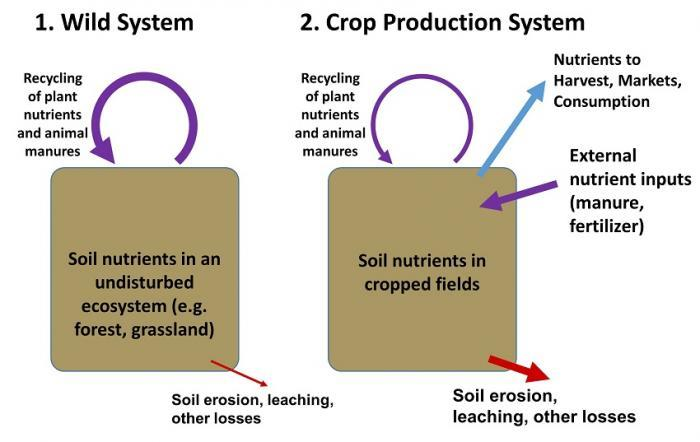 Wild and crop production systems. See text above for more details.