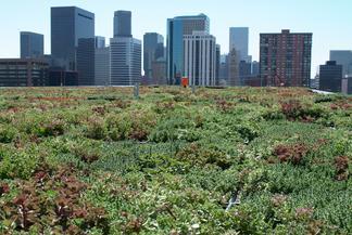 EPA Region 8 Green Roof, Denver, Colorado.
