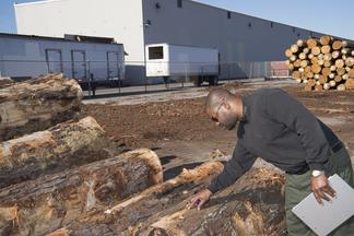 U.S. Department of Agriculture's (USDA) Animal and Plant Health Inspection Service (APHIS) employee inspects fumigated logs near the Port of New Orleans in New Orleans, Louisiana, on Wednesday, Nov. 20, 2013.
