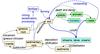 Phosphorus cycle with humans