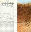 Soil Horizons: Identified by transitions in color.