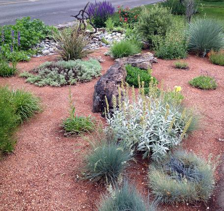 Photo of Xeric Landscaping
