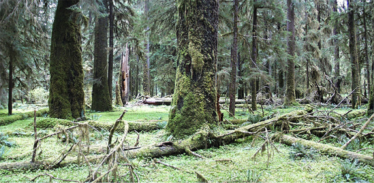 photograph of a lush green forest in western Washington state.