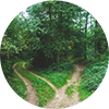 pathways between trees circle