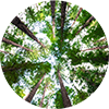 Tree canopy circle
