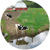 Water Ag Cows