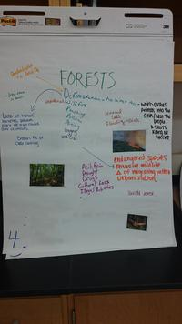 Forests Poster