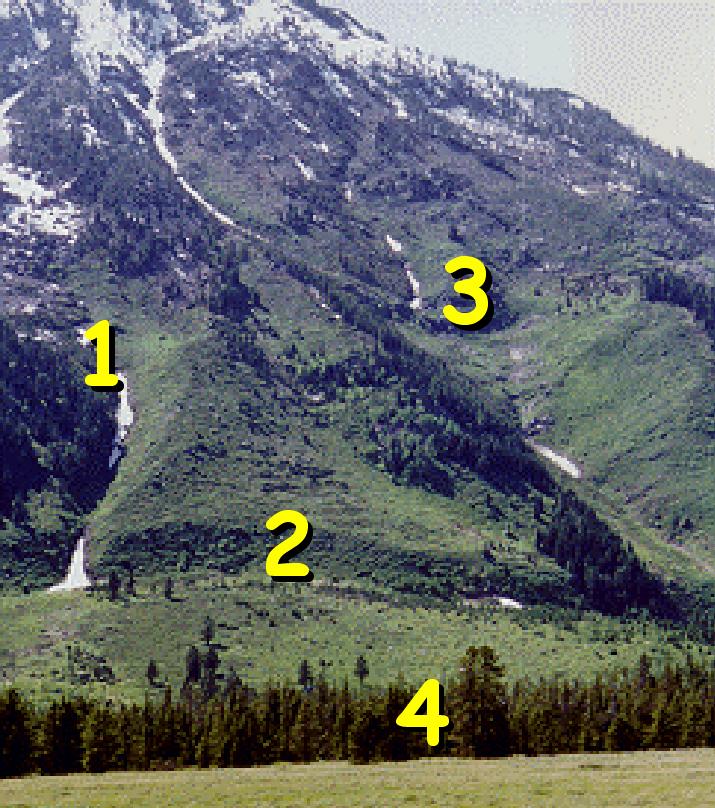 flank location