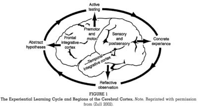Zull Regions of Cerebral Cortex