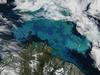 Barents Sea: Phytoplankton bloom in the Barents Sea captured August 14, 2011.