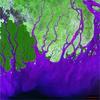 Ganges Brahmaputra delta