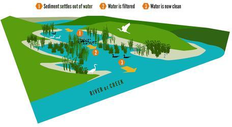 Wetlands Evidence #1