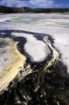 Microbial Mat of Porcelain Basin Yellowstone
