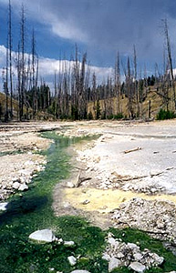 Lemonade Spring, Yellowstone National Park