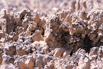 Closeup image of biological soil crust.