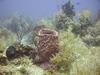 Underwater landscape with sponges