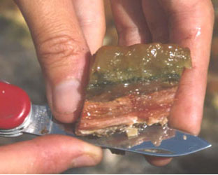 Picture of a microbial mat sample.