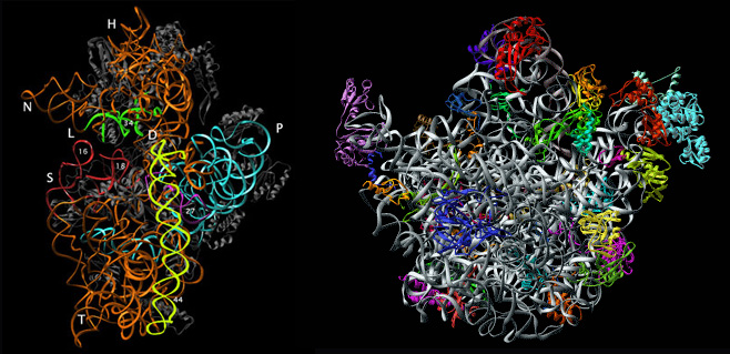 Crystal structure of ribosomal sub-units.