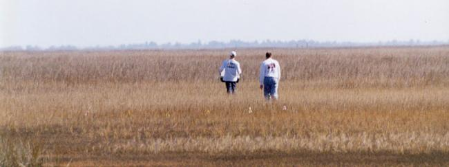 Two students working a sampling transect in the marsh.