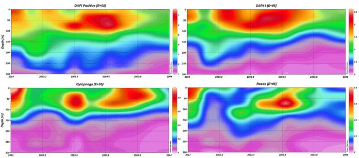 A panel of contour plots showing the temporal and spacial distribution of different bacterial groups in the upper 300 meters at BATS.