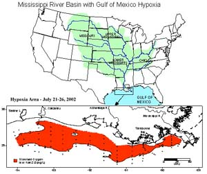 The Gulf of Mexico Dead Zone