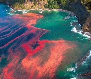 Dramatic photo showing a red algal bloom at Leigh, near Cape Rodney
