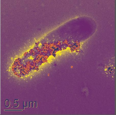 Nanoparticles on microbial cell