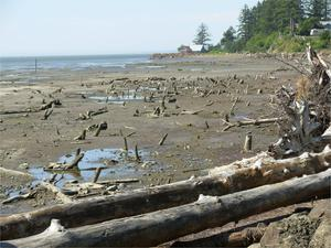 Photo of Olympic Penninsula field trip - driftwood in mud