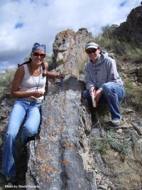 Cretaceous gastropod limestone