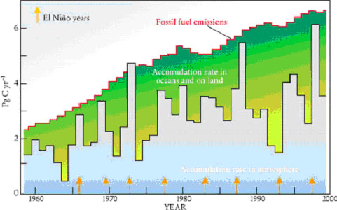 What is the fate of CO2 produced by fossil fuel combustion?
