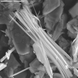 SEM image of tremolite asbestos