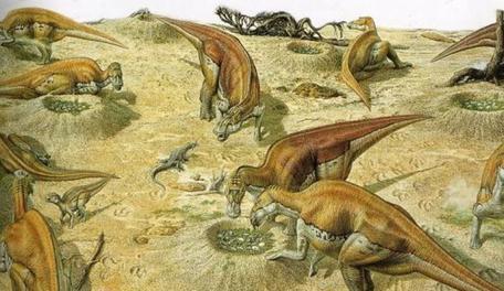 Maiasaura nesting ground